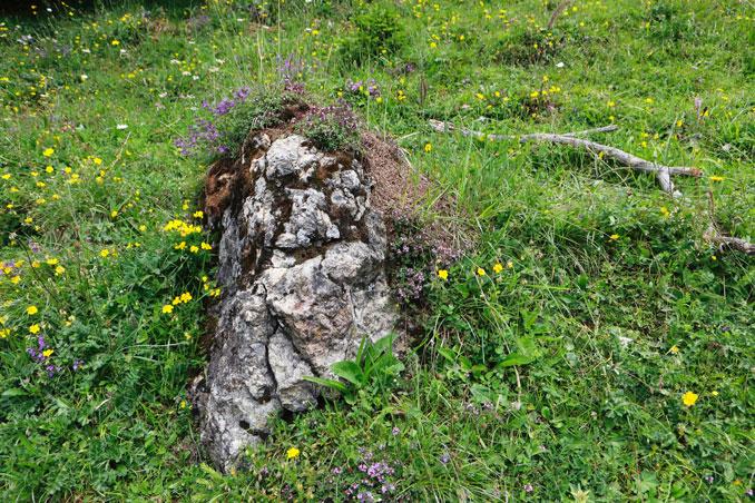 Nest von Formica truncorum an der sonnenexponierten Seite eines Steins. CC BY SA 4.0 Isabelle Trees Switzerland